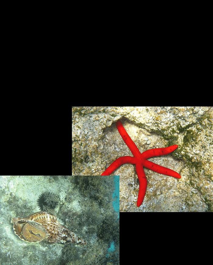 Unterwasser 2